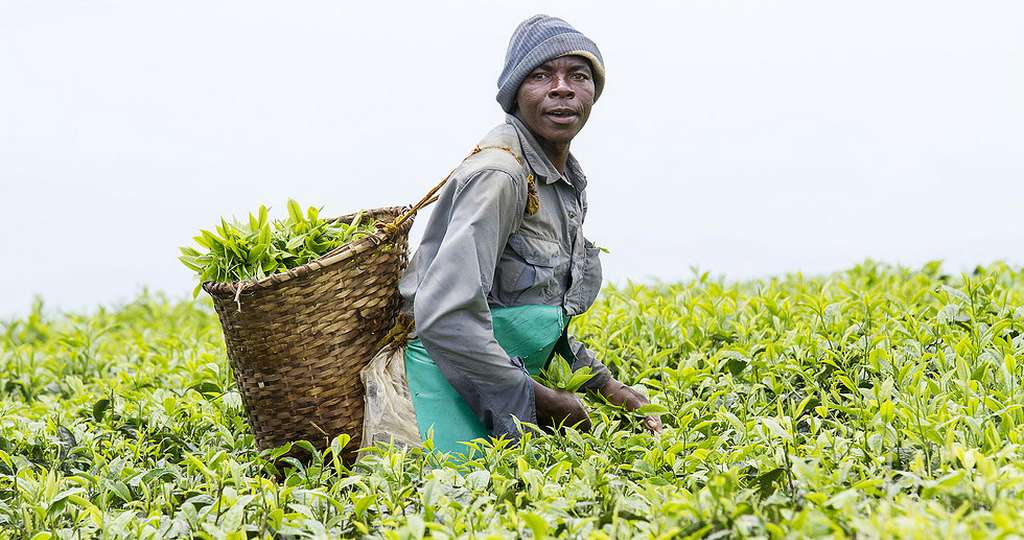 Agriculture en Afrique